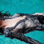 Water Without Adèle Exarchopoulos Is Just Boring and other Daily Links